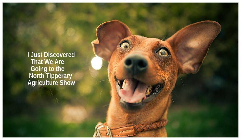 dog show ad